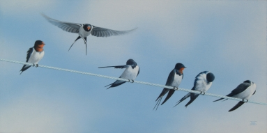 Swallows Toni Watts.jpg