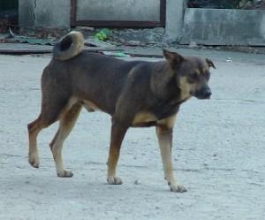 stray_dog1.jpg