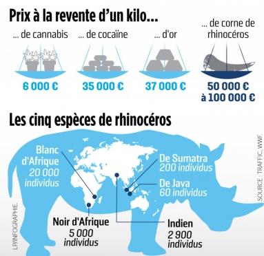 rhinoceros-braconnage-corne.jpg